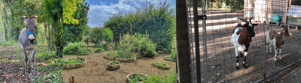 Gli animali della fattoria e il Giardino delle Erbe Aromatiche